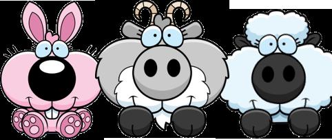 rabbit-goat-sheep